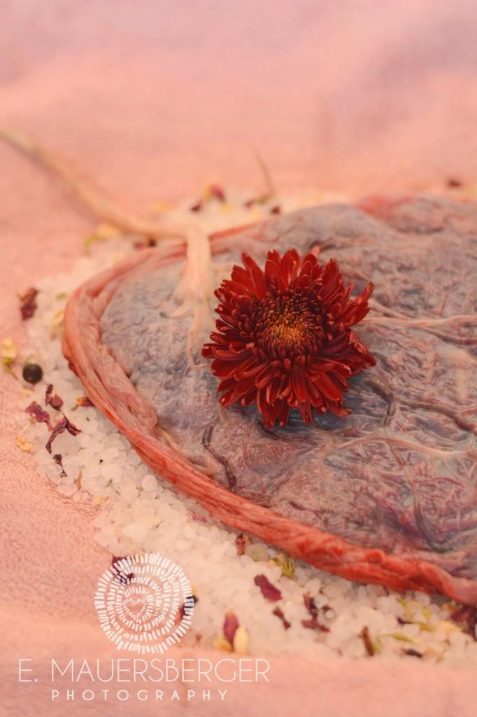 Plazenta auf Kräutersalz 24 Stunden nach der Geburt